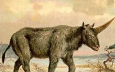 Illustration d'un animal éteint depuis longtemps connu sous le nom de la licorne Sibérie, ou l'sibiricum Elasmotherium (Crédit : Capture d'écran YouTube)