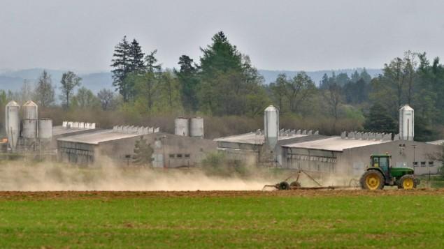 Un tracteur sur l'immense porcherie industrielle située sur l'emplacement d'un ancien camp de concentration à Lety, dans le sud de la Bohême, en République tchèque, le 4 mai 2005. (Crédit : Michal Cizek/AFP)