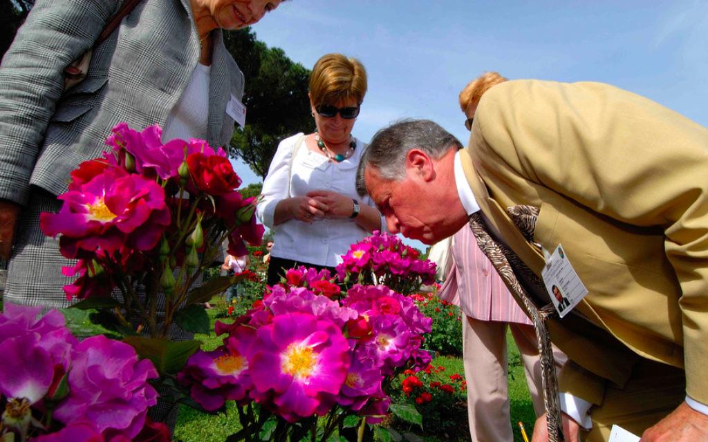 Un juge de la compétition internationale du Jardin des Roses public de Rome s'arrête pour sentir des roses (Crédit : autorisation Autorité des Jardins de Rome)