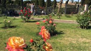 Chaque printemps, les visiteurs affluent pour profiter des 1100 espèces de roses qui poussent dans le jardin, mai 2016 (Crédit : Rossella Tercatin/Times of Israel)