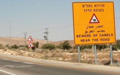 Panneau avertissant les conducteurs de la présence de chameaux sur une autoroute du Néguev, le 26 août 2007. (Crédit : Rebecca Zeffert/Flash90)