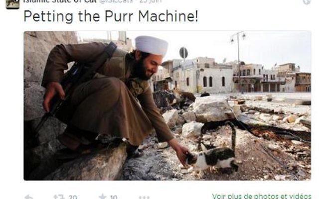 Un combattant djihadiste s'arrête pour caresser un chaton dans une nouvelle photo de propagande, mai 2016 (Capture d'écran Twitter)