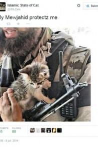 Une image de propagande de l'Etat islamique montrant un combattant caressant un petit chat (Crédit : autorisation Twitter)