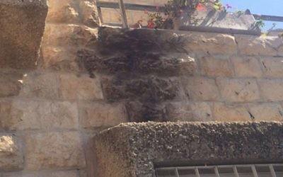 Dégâts de feu sur une maison dans le quartier Armon Hanatziv de Jérusalem causée par une bombe incendiaire le 17 juin 2016. (Police israélienne)