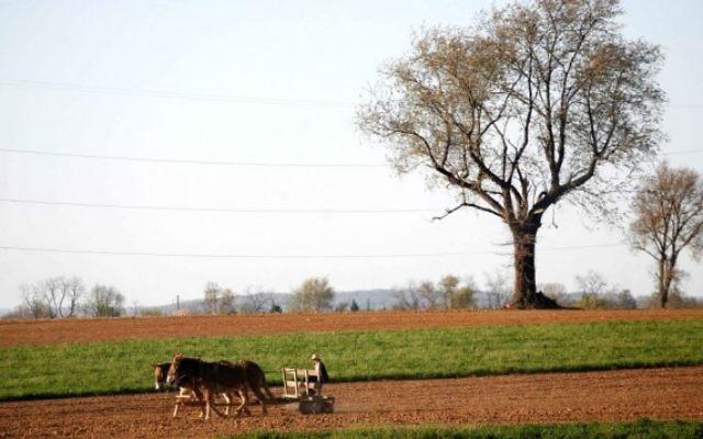 Un fermier amish laboure son champ avec ses chevaux, près de Wakefield, en Pennsylvanie. Illustration. (Crédit : Nati Shohat /Flash90)