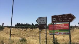 Les vergers de cerisiers organiques de Kibboutz Ramat Rachel étaient ouverts au public pour la première fois vendredi 3 juin 2016 (Photo: Jessica Steinberg / Times of Israel)