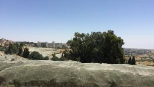 Les vergers de cerisiers bio recouverts de filets du Kibboutz Ramat Rachel près de Jérusalem (Photo: Jessica Steinberg / Times of Israel)