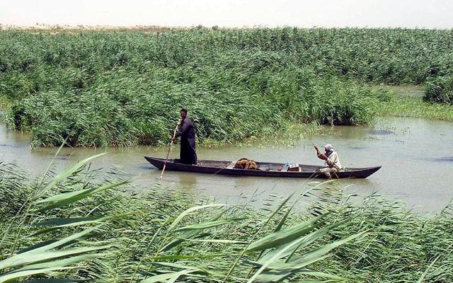 Un homme dans les marais du sud de l'Irak (Crédit : domaine public/wikimedia commons)