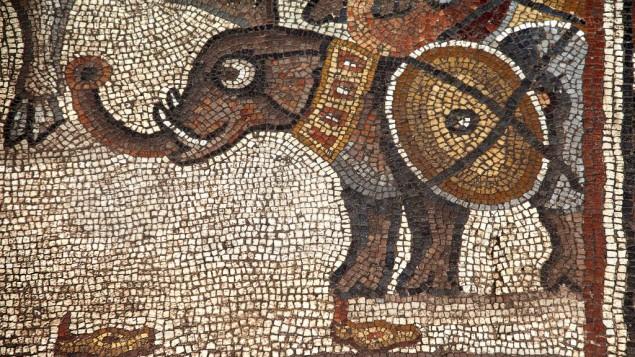 Mosaïque de la synagogue de Huqoq datant du 5e siècle, montrant un éléphant de guerre (Crédit : Jim Haberman)