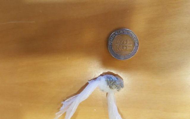 Un petit montant de marijuana, près d'une pièce de 10 shekels, retrouvé dans des toilettes de la Knesset le 20 juillet 2016. (Crédit : Knesset)