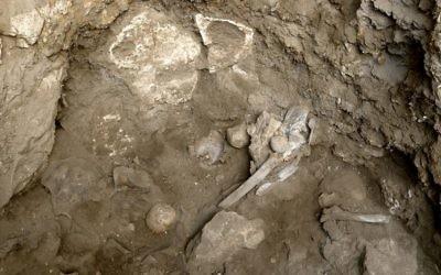 Les ossements d'une femme préhistorique découverts sur un site funéraire dans la grotte d'Hilazon, au nord d'Israël. (Crédits : Naftali Hilger)
