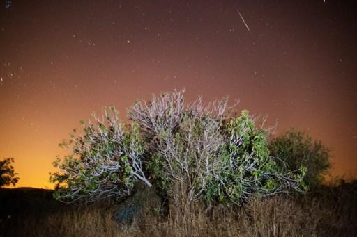 Une étoile filante pendant la nuit des Perséides à Luzit, dans le centre d'Israël, le 12 août 2016. (Crédit : AFP/Menahem Kahana)