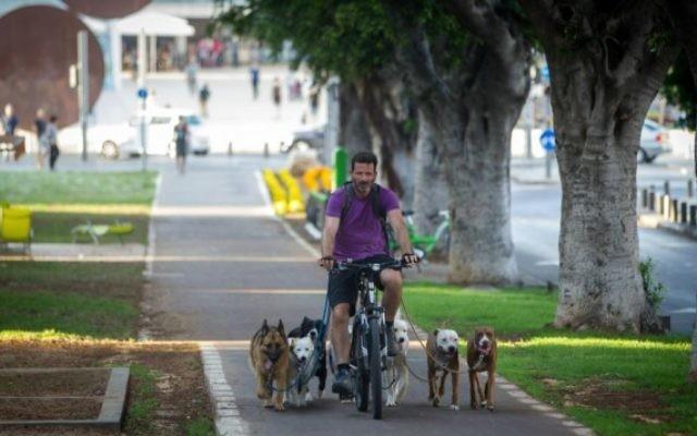 Un 'promeneur' de chiens professionnel sur le boulevard Rothschild de Tel Aviv. (Crédit : Nati Shochat/Flash 90)