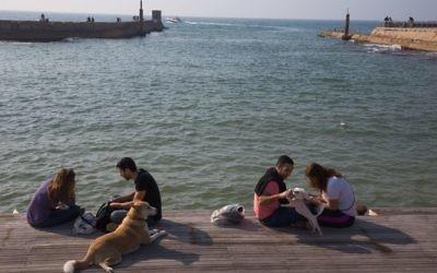 Des chiens et leurs maîtres en bord de mer au port de Tel Aviv. (Crédit : Miriam Alster/Flash90)