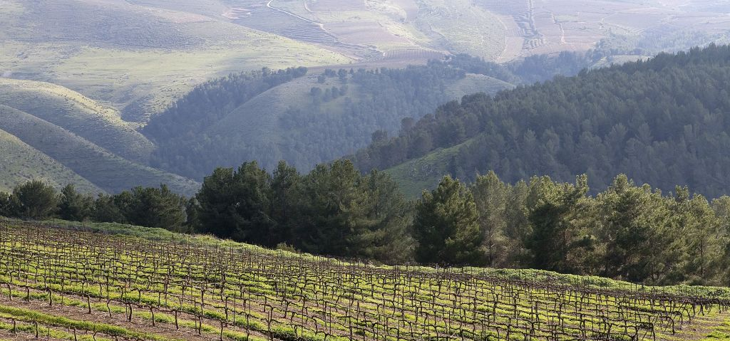 Galil Winery Vineyard (Crédit : autorisation)