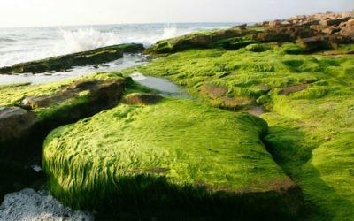 La plage de Nahariya, sur le rivage de la ville de Galilée occidentale. (Crédit : Nati Shochat/Flash 90)