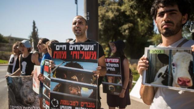 Manifestation devant la Knesset pour les droits des animaux, à Jérusalem, le 13 juillet 2016. (Crédit : Yonatan Sindel/Flash90)