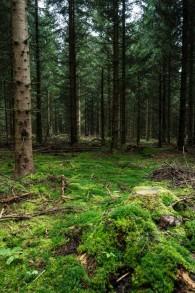 La forêt proche de Rodacherbrunn, dans le centre de l'Allemagne, où le squelette de Peggy Knobloch, 9 ans, a été retrouvé en juillet 2016. Des preuves ADN ont lié son meurtre à Uwe Boehnhardt, membre décédé d'un groupuscule néonazi, NSU. Photographie prise le 14 octobre 2016. (Crédit : AFP/dpa/Nicolas Armer)