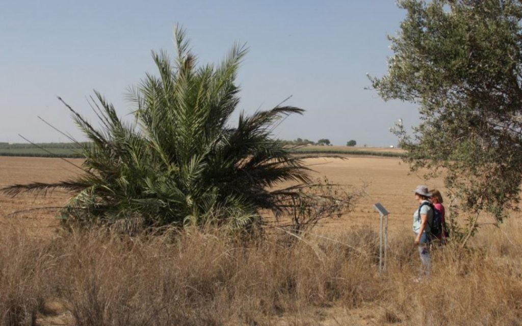 Des dattiers,des arbres et des vignes bordent le chemin à travers la forêt Komemiyut (Crédit : Shmuel Bar-Am)