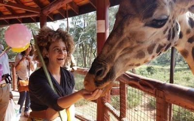 Juste après que Betty la Girafe a mangé mon loulav, j'étais choquée pendant qu'elle finissait le reste des bonbons pour girafe au Centre des girafes de Nairobi, au Kenya, le 16 octobre 2016. (Crédit : Gail DeGeorge/Global Sisters Report)