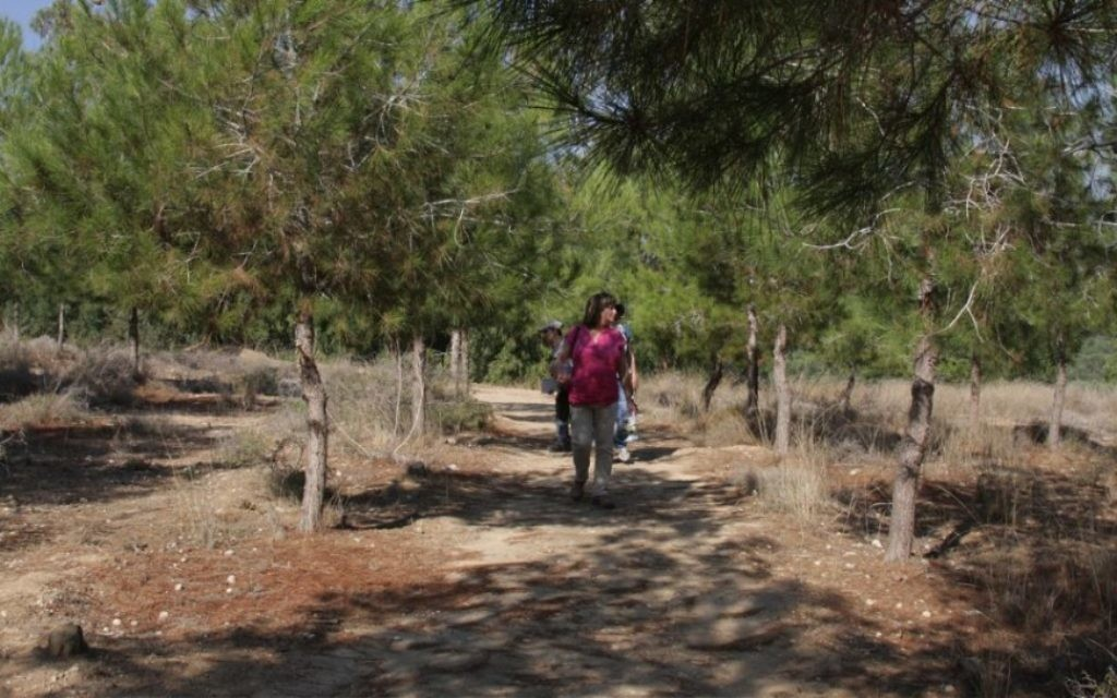 Le chemin à travers la forêt de Kommemiyut comprend une variété de feuillage, plusieurs puits, un verger et une carrière abandonnée (Crédit : Shmuel Bar-Am)