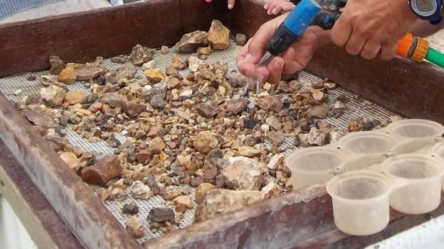 Des bénévoles du projet de tamisage du mont du Temple tentent de découvrir des artefacts historiques. (Crédit : projet de tamisage du mont du Temple)