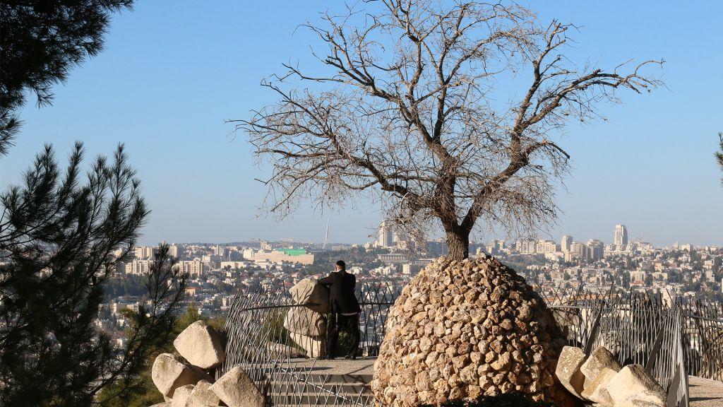 Un arbre poussant dans une sculpture conçue par un résident de Ramat Rachel au poste d'observation Yair dans le kibboutz Ramat Rachel (Crédit : Shmuel Bar-Am)