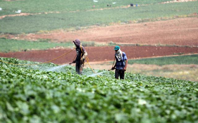 Un champ agricole en en Israël, en mai 2013 (Crédit : Issam Rimawi / Flash90)