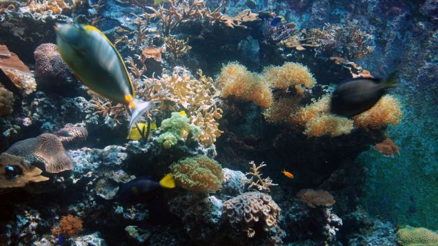 De nombreux poissons de la trentaine d'espèces représentées dans l'aquarium atteignent une taille qu'ils n'atteignent normalement que dans leur habitat naturel. (Crédit : Miriam Nahum/Times of Israel)