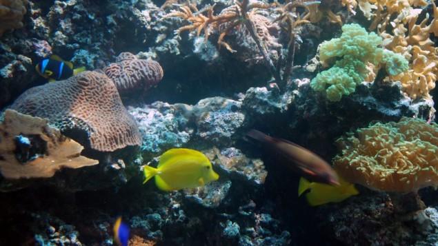 Quelques un des 150 poissons et coraux de l'aquarium. (Crédits : Miriam Nahum/Times of Israel)