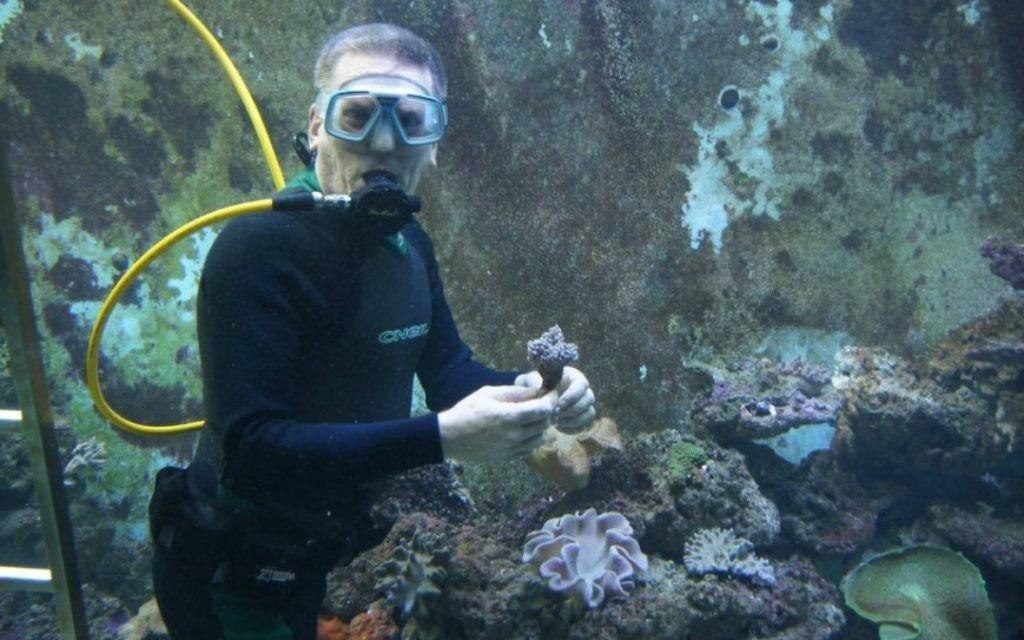 Eli Fruchter installe des coraux dans l'aquarium en février 2013. (Crédit : Facebook/Eli's 10 000 Gallon Reef Aquarium)