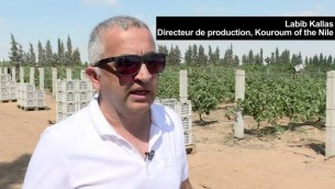 Labib Kallas, directeur de production du vignoble égyptien Kouroum of the Nile, en novembre 2016. (Crédit : capture d'écran AFP)