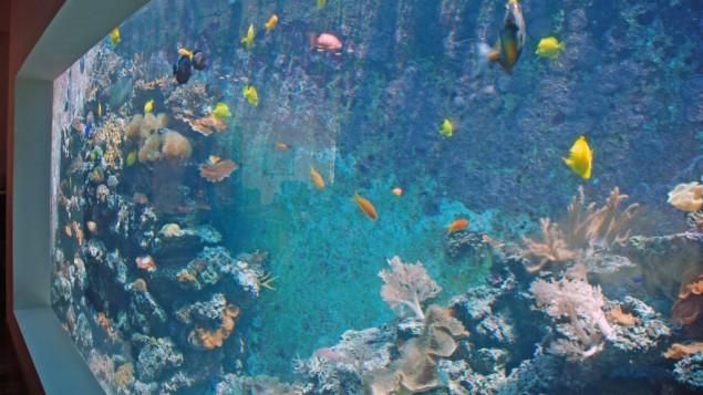 L'aquarium vu du salon. (Crédits : Miriam Nahum/Times of Israel)