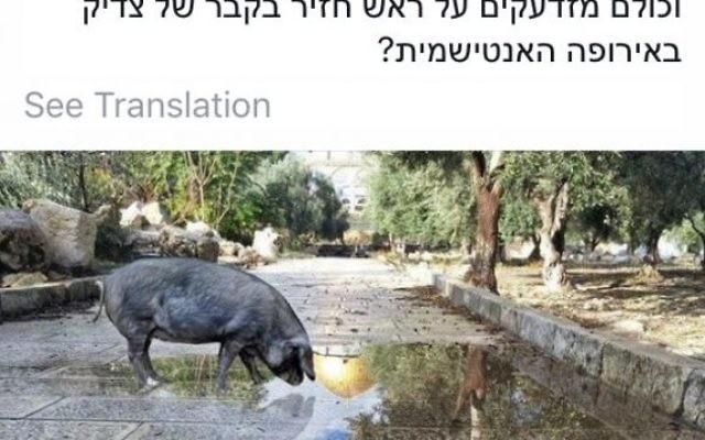 Capture d'écran d'une photo retouchée mettant en scène un porc sur le mont du Temple. La photo a été postée sur les réseaux sociaux par un activiste juif, le 21 décembre 2016. (Crédit : capture d'écran/Facebook)