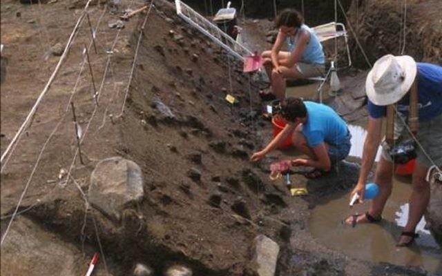 Fouilles dans le site préhistorique englouti de boue de Gesher Benot Yaaqov. (Crédit: Naama Goren-Inbar)