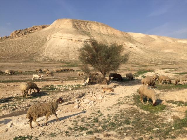 Un site associé à celui de Gilgal dans la Bible, à proximité de Jéricho (Crédit : RGrobman / Wikipedia)