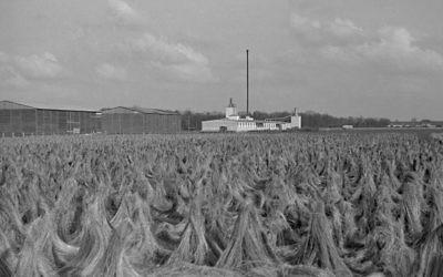 Le champ de lin d'Unterschleissheim, tel qu'il apparaissant durant l'Holocauste (Crédit :Peter Vahlensieck)