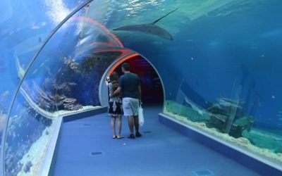 Les visiteurs marchent dans un tunnel de 15 mètres à travers l'attraction  Shark World, ou le monde des requins, à l'Observatoire sous-marin d'Eilat  (Crédit : Shmuel Bar-Am)