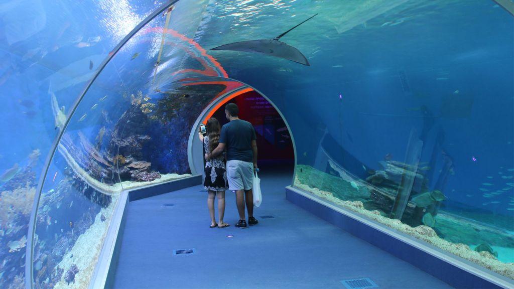 Les visiteurs marchent dans un tunnel de 15 mètres à travers l'attraction Shark World, ou le monde des requins, à l'Observatoire sous-marin d'Eilat (Crédit : Shmuel Bar-Am)
