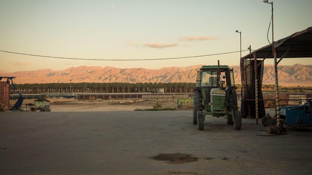 Des rangées de dattiers et les frontières montagneuses de la Jordanie vues depuis le Kibbutz Ketura dans le sud d'Israël (Crédit : Luke Tress/Times of Israel)
