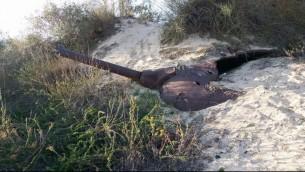Un tank, qui serait plus ancien que la fondation d'Israël en 1948, a été retrouvé dans les dunes de sable de la réserve naturelle de Nitzanim, dans le sud du pays, en février 2017. (Crédit : police israélienne)