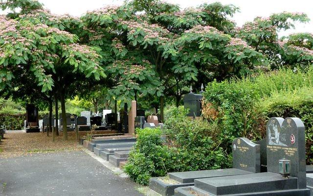 Des tombes juives dans le cimetière parisien (section 88) entourées de mimosas de Constantinople (Crédit : Djampa/https://commons.wikimedia.org/w/index.php?curid=27479820)