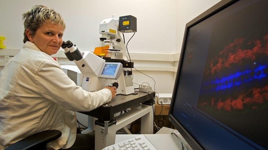 Une scientifique de l'Institut Weizmann travaille au microscope (Crédit : Doron Horowitz/Flash90)
