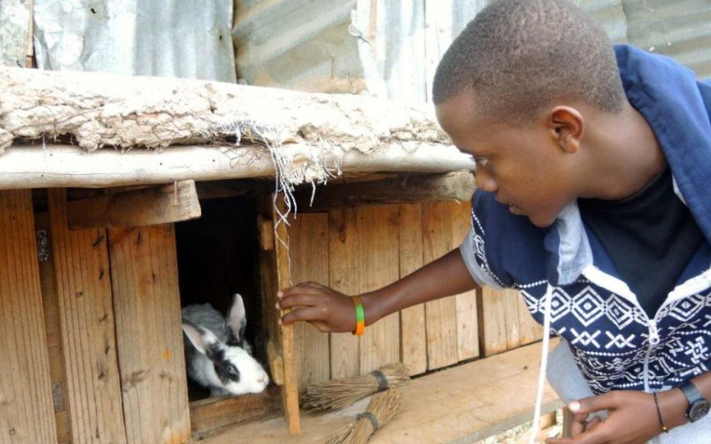 Patrick Rwirahira Rugema, le ministre des Affaires étrangères de l'Agahozo Shalom Youth Village au Rwanda, s'occupe des lapins de la ferme scolaire, le 18 février 2017. (Crédit : Melanie Lidman/Times of Israel)