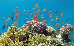 Les poissons tropicaux à la barrière de corail d'Eilat. (Crédit : Asaf Zvuloni / Israel Nature and Parks Authority / FLASH90)