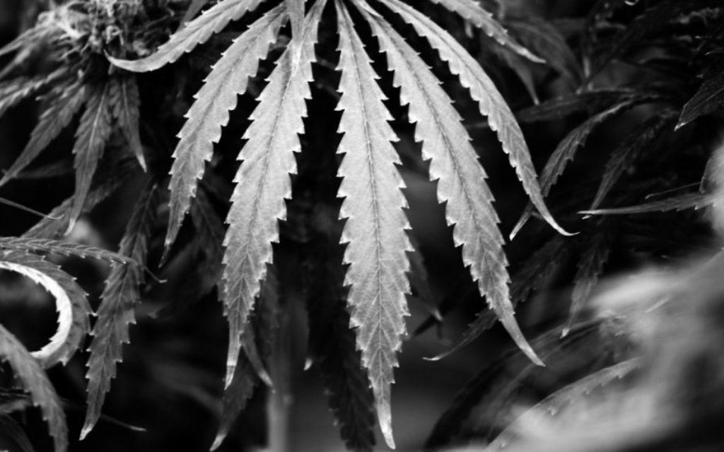 Photo d'Ezra Soiferman de la 'Macrojuana' (Crédit : ©Perpetuum Productions)