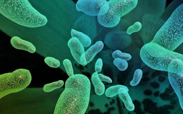 Bactéries. Illustration. (Crédit : autorisation)