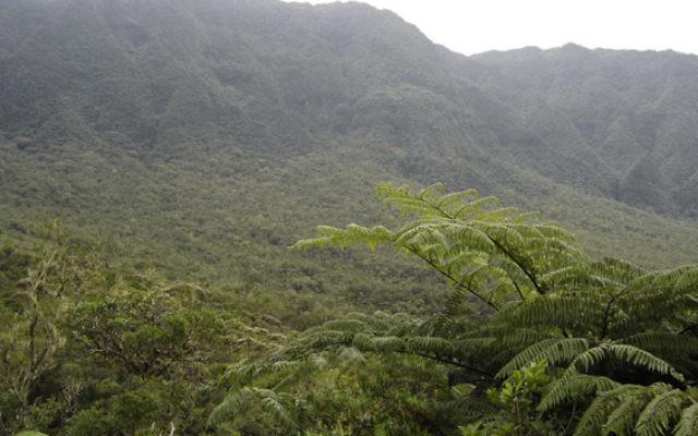 La forêt tropicale primaire de Bébour (Île de La Réunion). Illustration. (Crédit : Korrigan/Domaine public/WikiCommons)