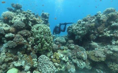 Chercheurs de l'Institut interuniversitaire pour les sciences marines à Eilat, dans le sud d'Israël, pour surveiller la croissance des coraux, le 12 juin 2017. (Crédit : Menahem Kahana/AFP)
