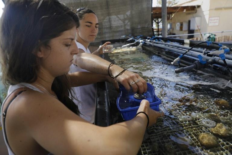 Gal Eviatar, à gauche, et Jessica Bellsworthy, doctorante, de l'Institut interuniversitaire pour les sciences marines à Eilat, dans le sud d'Israël, étudient la croissance des coraux, le 12 juin 2017. (Crédit : Menahem Kahana/AFP)